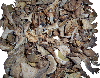 mixed forest mushrooms, dried mushrooms, slippery jack, oyster mushrooms, Champignons